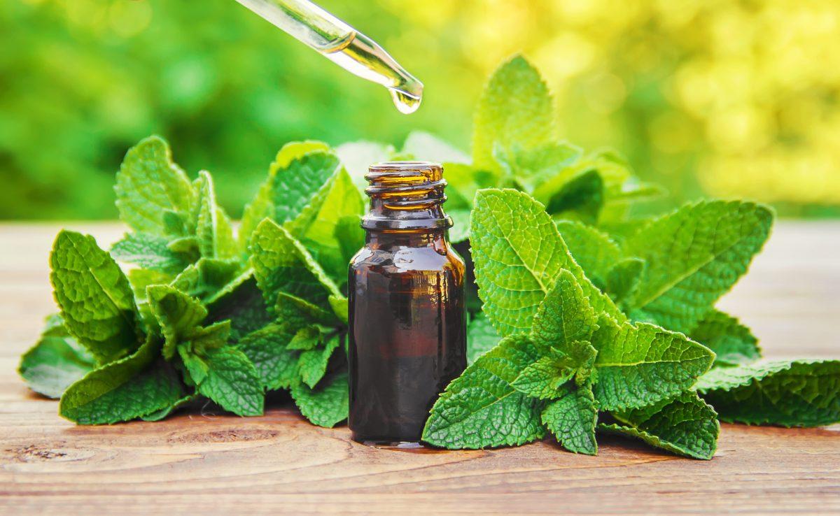Remédios fitoterápicos: para o que servem e como agem?